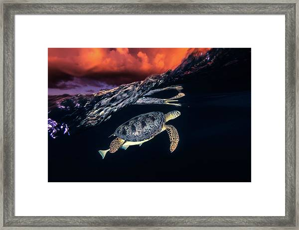 Green Turtle And Sunset - Sea Turtle Framed Print