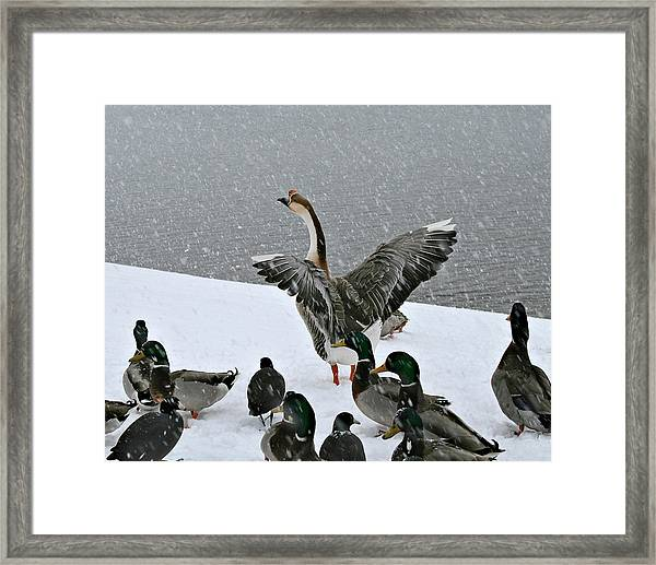 Green Valley Ducks Framed Print