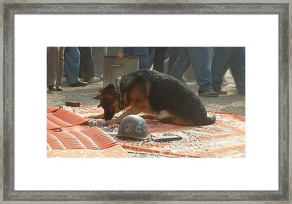 Greenpeace Dog Framed Print