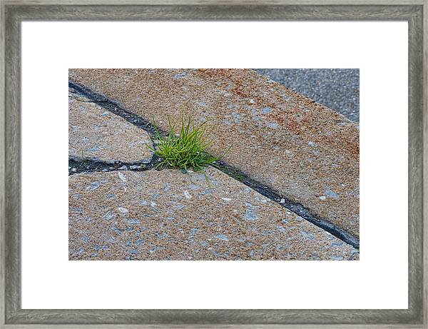 Framed Print featuring the photograph Greens In The Crack by Beth Sawickie
