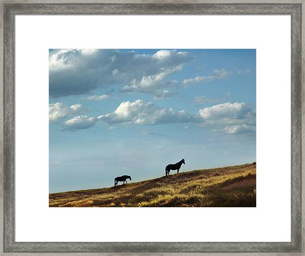 Greenwood County Grazers Framed Print