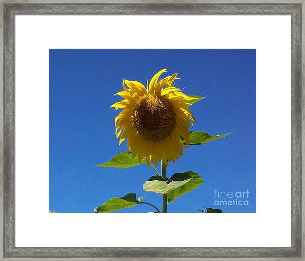 Sunflower With Open Arms Framed Print