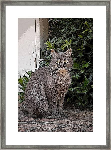 Grey Cat Framed Print