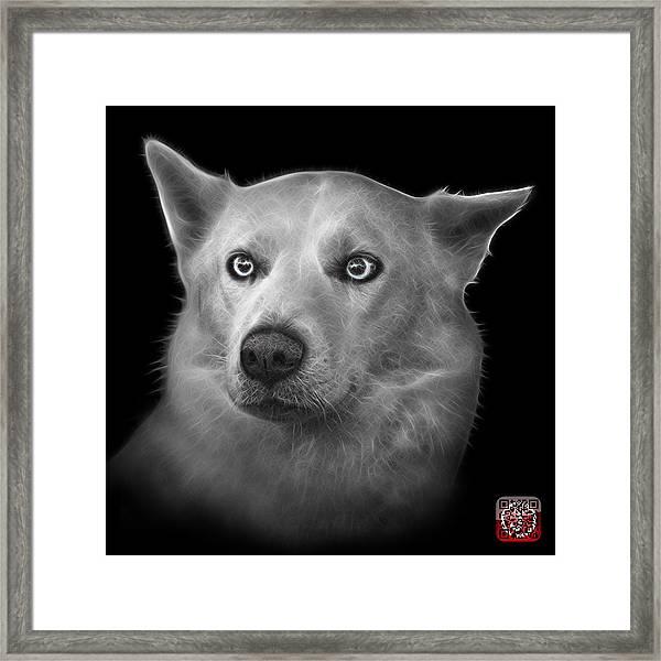 Greyscale Mila - Siberian Husky - 2103 - Bb Framed Print