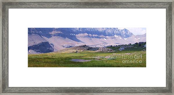 Grizzly Meadows Framed Print