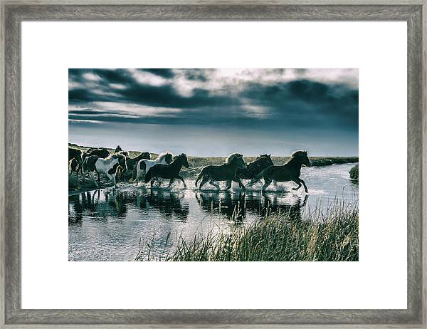 Group Of Horses Crossing A River Framed Print