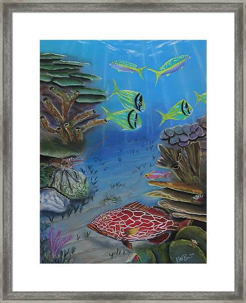 Grouper On The Reef Framed Print