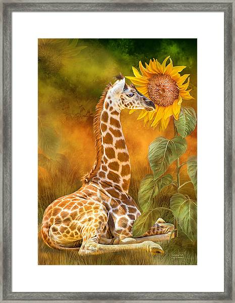 Growing Tall - Giraffe Framed Print