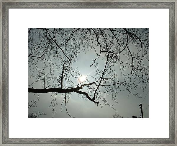 Grown In Cold Light Framed Print