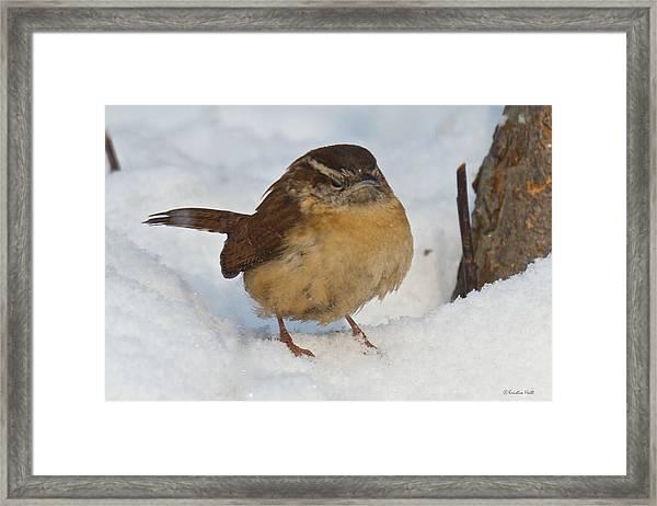 Grumpy Wren Framed Print