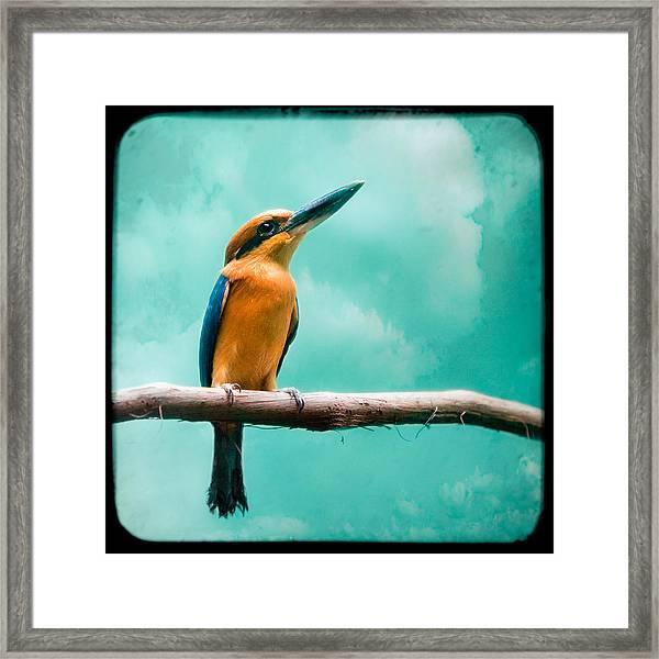Guam Kingfisher - Exotic Birds Framed Print