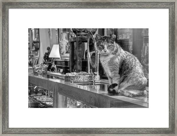Guard Cat Framed Print