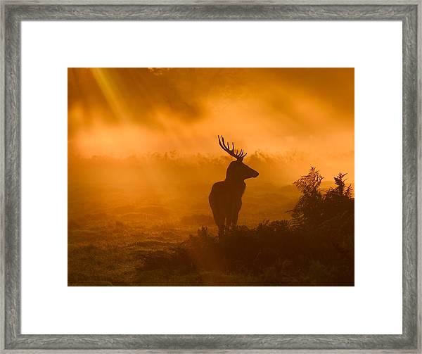 Guard Of Light Framed Print by Robert Fabrowski