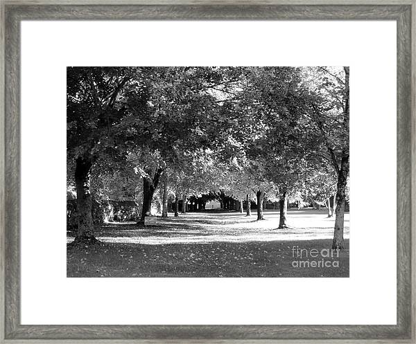 Guarded Pathway Framed Print