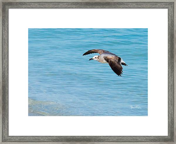 Gull At Lido Beach IIi Framed Print