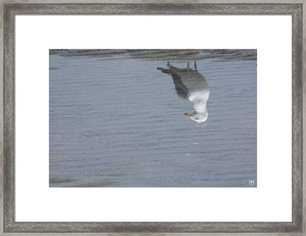 Gull At The Beach Framed Print