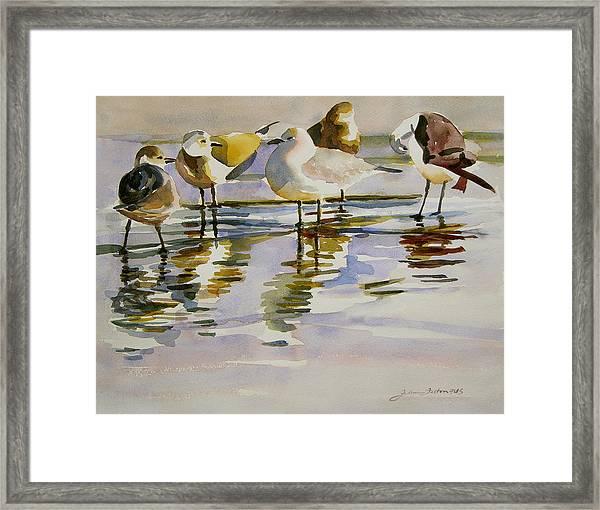 Gull Family Framed Print