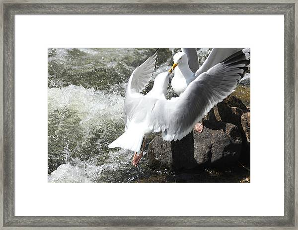 Gull Greeting Framed Print