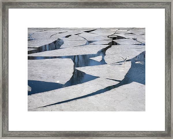 Gull On Ice Framed Print
