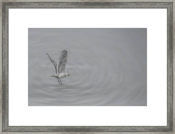 Framed Print featuring the photograph Gull Vortex by Beth Sawickie