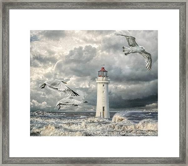 Gulls At Perch Rock Framed Print