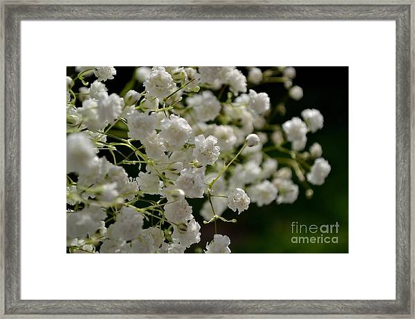 Framed Print featuring the photograph Gypsophilia by Scott Lyons
