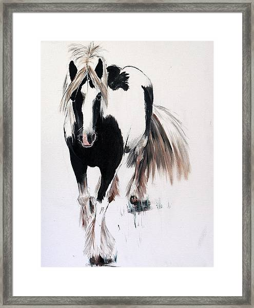 Gypsy Vanner Framed Print