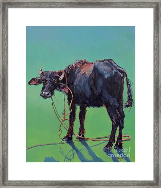 H2o Buffalo Framed Print