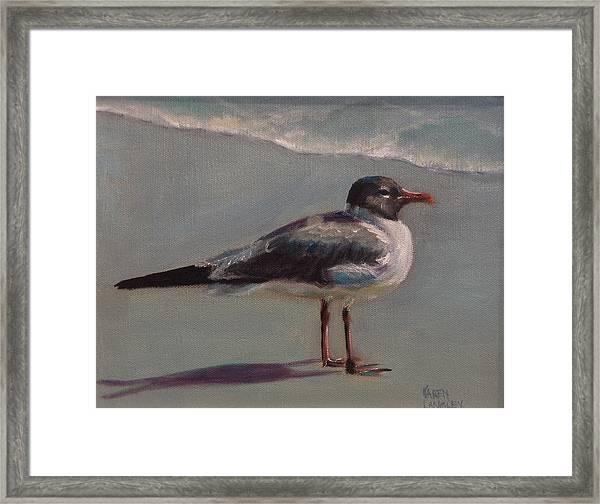 Haha Gull Framed Print by Karen Langley