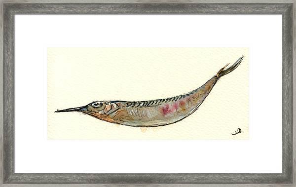 Halfbeak Fish Framed Print