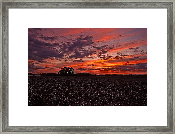 Halloween Dawn  Framed Print