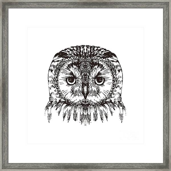 Hand Drawn Owl Portrait, Vector Framed Print
