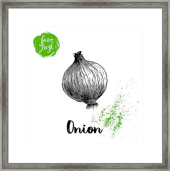 Hand Drawn Sketch Onion. Farm Fresh Framed Print by Sketch Master