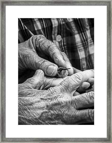 Hands Holding A Hummingbird Framed Print