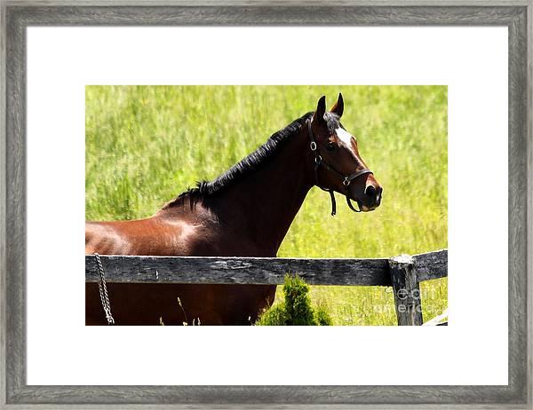 Handsom Horse Framed Print
