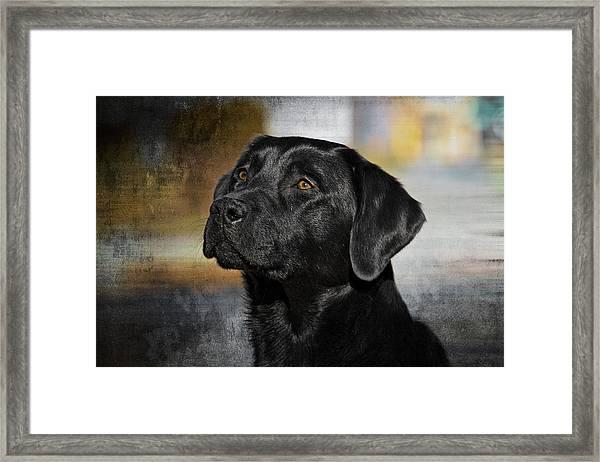 Handsome Black Lab Framed Print