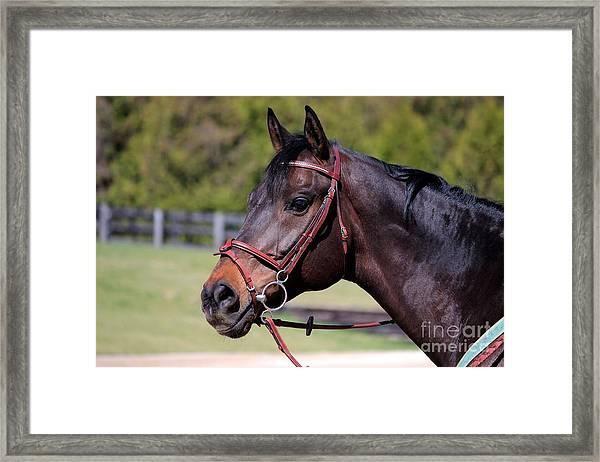 Handsome Gelding Framed Print