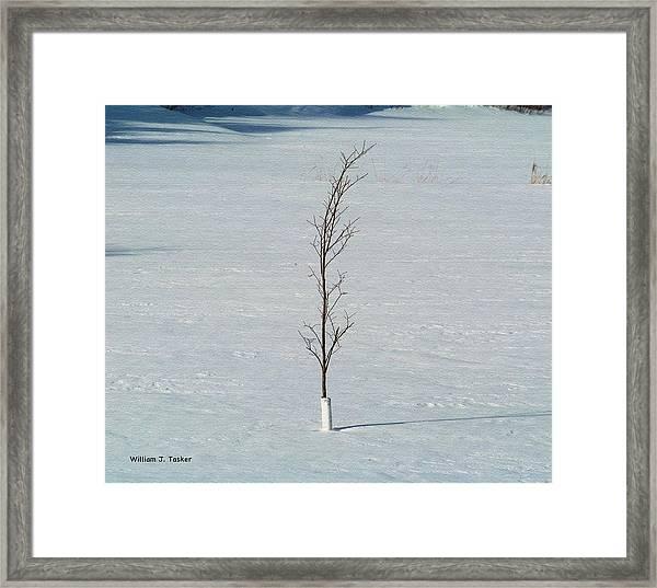 Hang On Baby Elm Framed Print