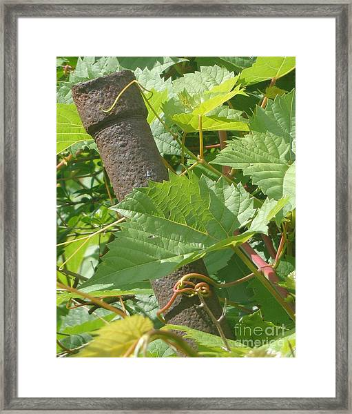 Hang Tight Framed Print