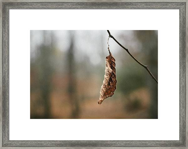 Framed Print featuring the photograph Hanger On by Steve Stanger