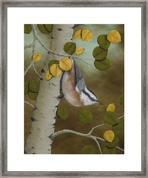 Hanging Around-red Breasted Nuthatch Framed Print