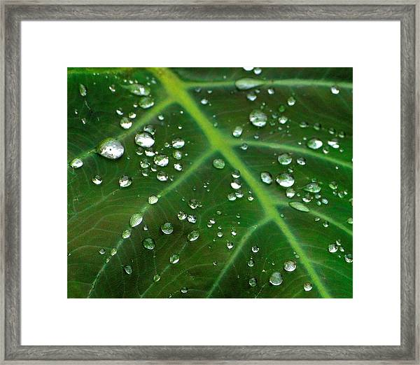 Hanging Droplets Framed Print