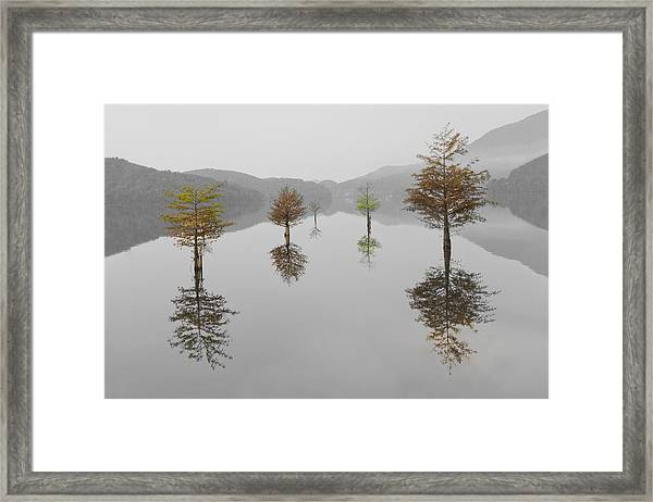 Framed Print featuring the photograph Hanging Garden by Debra and Dave Vanderlaan