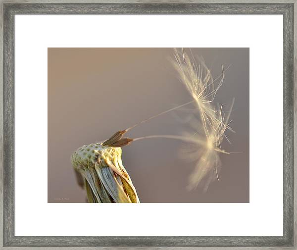 Hanging On Framed Print