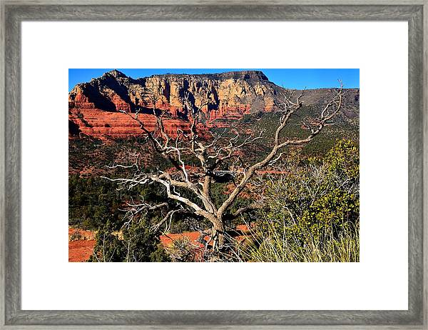 Hangover Trail Framed Print