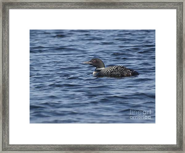 Happy As A Loon Framed Print