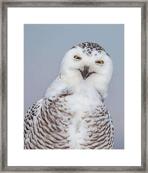 Happy Snowy Owl Framed Print