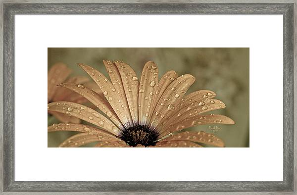 Happy To Be A Raindrop Framed Print