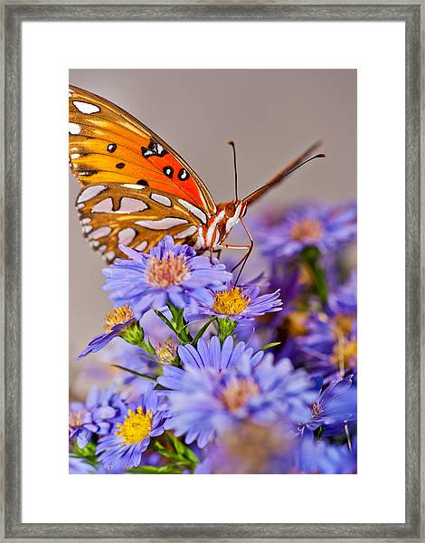 Framed Print featuring the photograph Happy To Be Here by Francis Trudeau