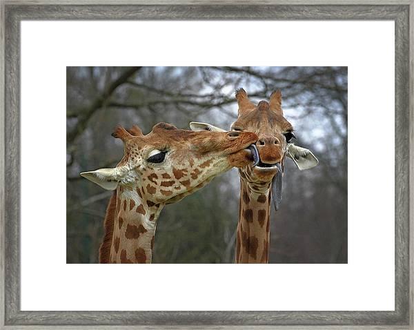 Happy Valentine Framed Print